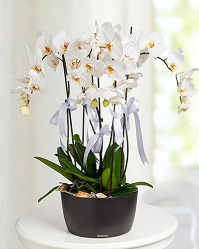 5 Dal Orkide Aranjmanı