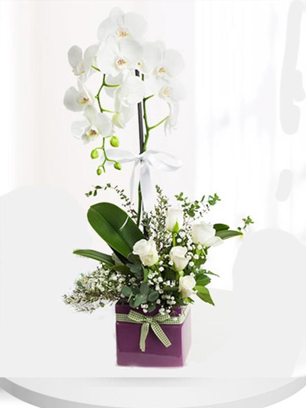 Beyaz inci Orkide ve güller