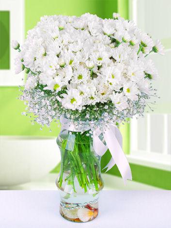 Vazo İçerisinde Beyaz Papatyalar