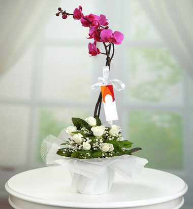Orkide Beyaz Gül