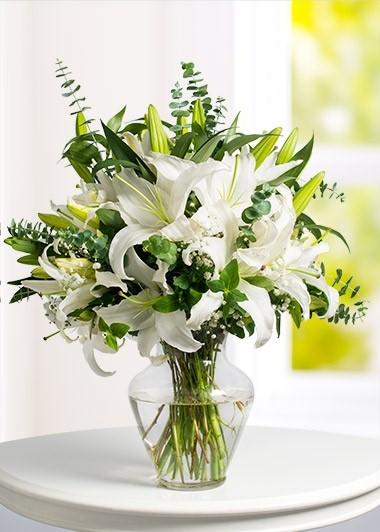 Beyaz İnci Lilyum